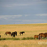 Horses In Saskatchewan Poster by Mark Newman