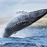 Humpback Whale Poster by M Swiet Productions