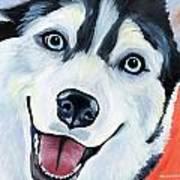 Husky Poster by Melissa Smith