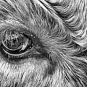 In The Eye Poster by John Farnan