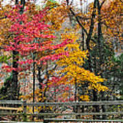 Indiana Fall Color Poster by Alan Toepfer