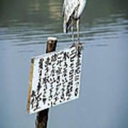 Japanese Waterfowl - Kyoto Japan Poster by Daniel Hagerman