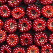 Japanese Wineberry Pattern Poster by Tim Gainey