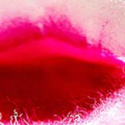Jasmine Kiss Poster by Ben and Raisa Gertsberg