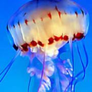 Jellyfish 3 Poster by Dawn Eshelman