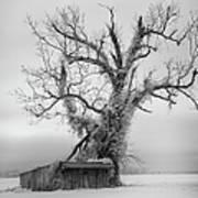 Killer Tree - Outer Banks Poster by Dan Carmichael