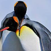 King Penguins Bonding Poster by Tony Beck