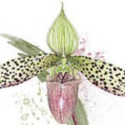 Ladys Slipper - Orchid 16n - Elena Yakubovich Poster by Elena Yakubovich