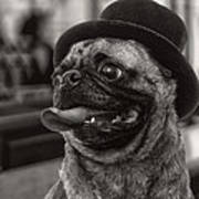 Last Call Pug Greeting Card Poster by Edward Fielding