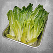 Leaf Lettuce Poster by Andee Design