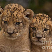 Lean On Me Poster by Ashley Vincent