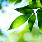 Leaves Green Poster by Boon Mee