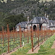 Ledson Winery And Vineyard In Late Winter Just Before The Bloom 5d22192 Poster by Wingsdomain Art and Photography