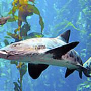 Leopard Shark Poster by Barbara Snyder