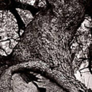 Lightning Tree  Poster by Trish Mistric