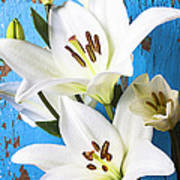 Lilies Against Blue Wall Poster by Garry Gay