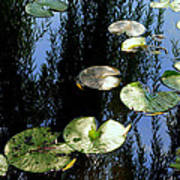 Lilly Pad Reflection Poster by Frozen in Time Fine Art Photography
