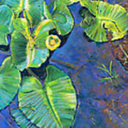 Lily Pads Poster by Nick Payne