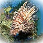 Lion Fish 2 Poster by TN Fairey