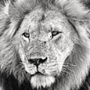 Lion King Poster by Adam Romanowicz