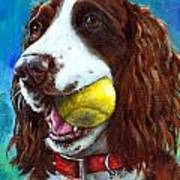 Liver English Springer Spaniel With Tennis Ball Poster by Dottie Dracos