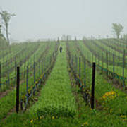 Lone Figure In Vineyard In The Rain On The Mission Peninsula Michigan Poster by Mary Lee Dereske