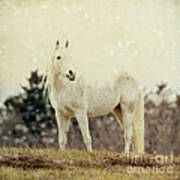 Lone Horse Poster by Diane Miller