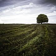 Lone Tree  Poster by John Farnan