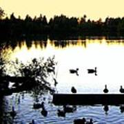 Lost Lagoon At Sundown Poster by Will Borden