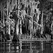 Louisiana Bayou Poster by Mountain Dreams