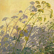 Lovage Clematis And Shadows Poster by Timothy  Easton