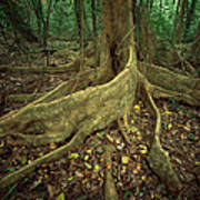 Lowland Tropical Rainforest Poster by Ferrero-Labat