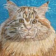 Maine Coon Cat Poster by Kathy Marrs Chandler