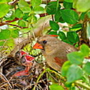 Mama Bird Poster by Frozen in Time Fine Art Photography