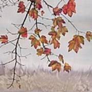 Maple In Gray Sky Poster by Carolyn Doe