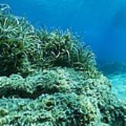 Marine Plants Poster by Science Photo Library