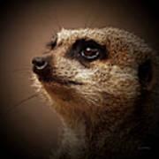 Meerkat 6 Poster by Ernie Echols