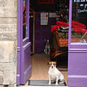 Minding The Shop. Two French Dogs In Boutique Poster by Menega Sabidussi