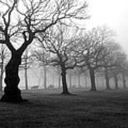 Mist In The Park Poster by Mark Rogan