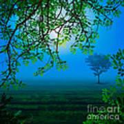 Misty Night Poster by Bedros Awak