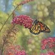 Monarch Butterfly Poster by John Zaccheo