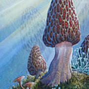 Morel Mushrooms Poster by Mike Stinnett