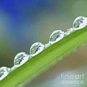 Morning Dew Drops Poster by Heiko Koehrer-Wagner
