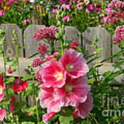 My Garden 2011 Poster by Steve Augustin