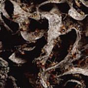 Nasute Termite Nest Amazonian Peru Poster by Mark Moffett