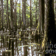 Natchez Trace Wetlands Poster by Bob Phillips