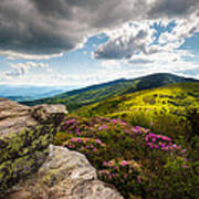 North Carolina Blue Ridge Mountains Roan Rhododendron Flowers Nc Poster by Dave Allen