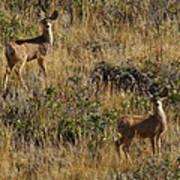 Oh Deer Poster by Charles Warren