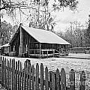 Okefenokee Home Poster by Southern Photo