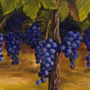 On The Vine Poster by Darice Machel McGuire
